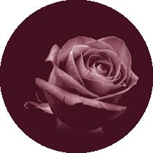 Blume zum Abschied